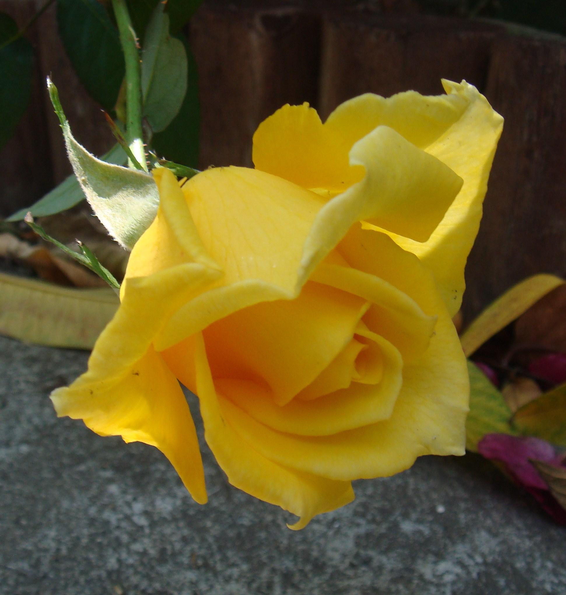 Розы во время секса