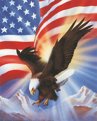This image has an empty alt attribute; its file name is american-eagle-1.jpg
